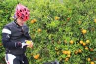 fietsen valancia en murcia