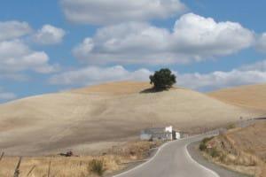 fietsen-andalusie-droge-heuvels