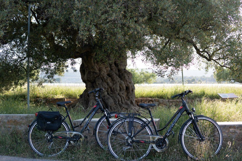via verde fiets huren